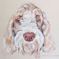 Millie - Colour Pastel