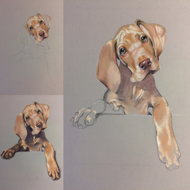 pet_portrait_artist_therhubarbtree