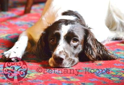 Pet-Photography-Bethany-Moo